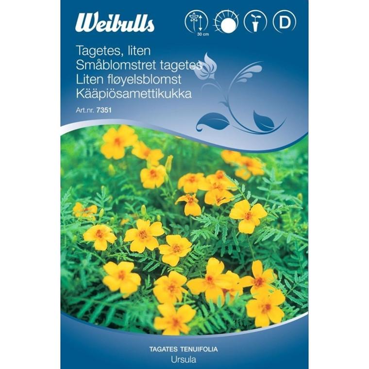Tagetes, småblomstret - Tagetes tenuifolia - Ursula - Frø (W7351)