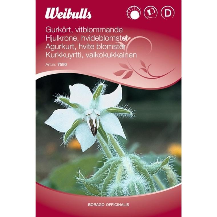 Hjulkrone - Borago officinalis, hvid  - Frø (W7590)