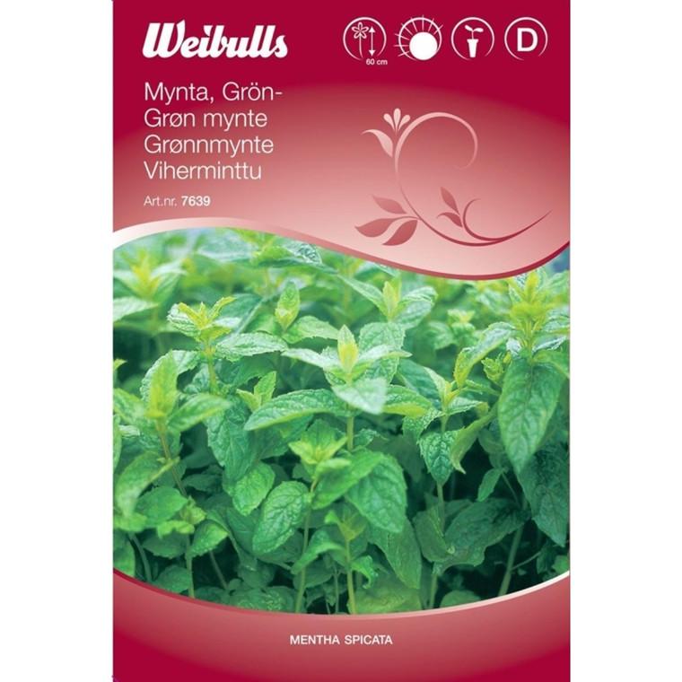 Grøn Mynte - Mentha spicata - Frø (W7639)