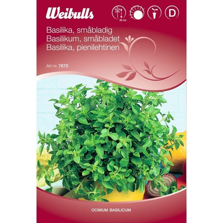 Basilikum småbladet - Ocimum basilicum - Frø (W7675)