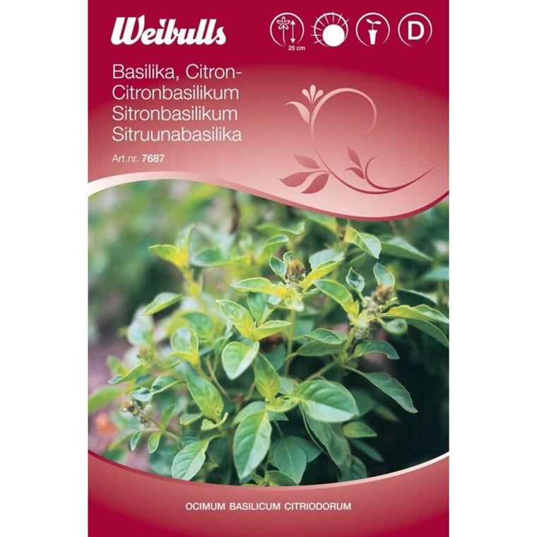 Citronbasilikum  - Ocimum basilicum citriodorum - Frø (W7687)