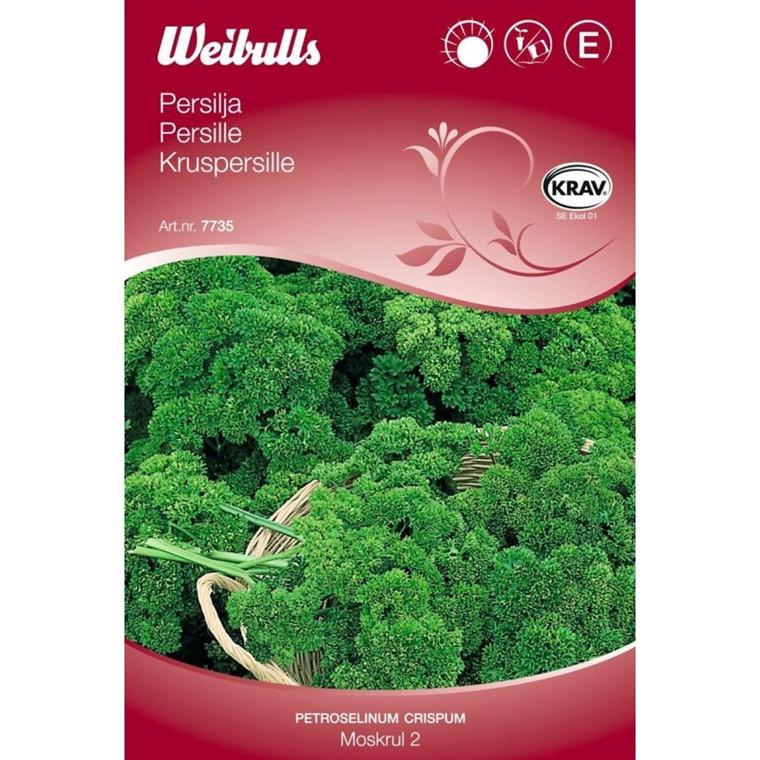 Kruspersille - Petroselinum crispum - Moskrul 2 - KRAV - Frø (W7735)