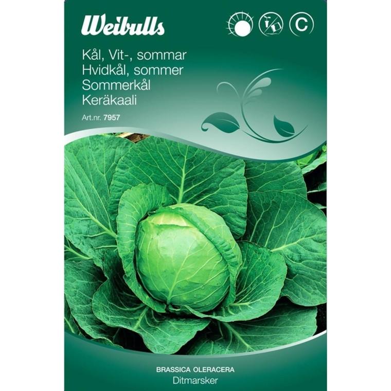 Hvidkål, sommer - Brassica oleracea - Ditmarsker - Frø (W7958)