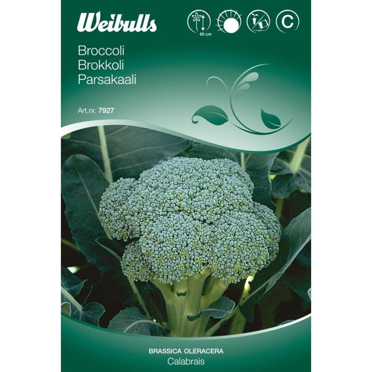 Broccoli - Brassica oleracea - Calabrais - Frø (W7928)