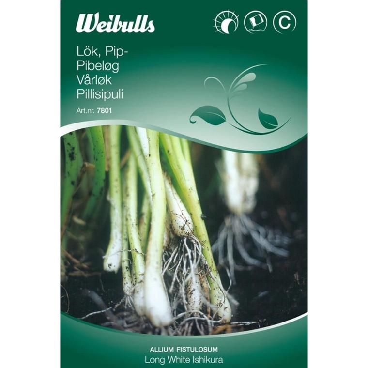 Pibeløg - Allium fistulosum - White Ishikura - Frø (W7801)