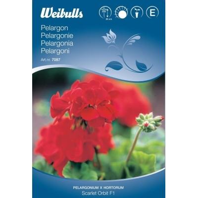 Pelargonie - Pelargonium x hortorum - Scarlet Orbit F1 - Frø (W7087)