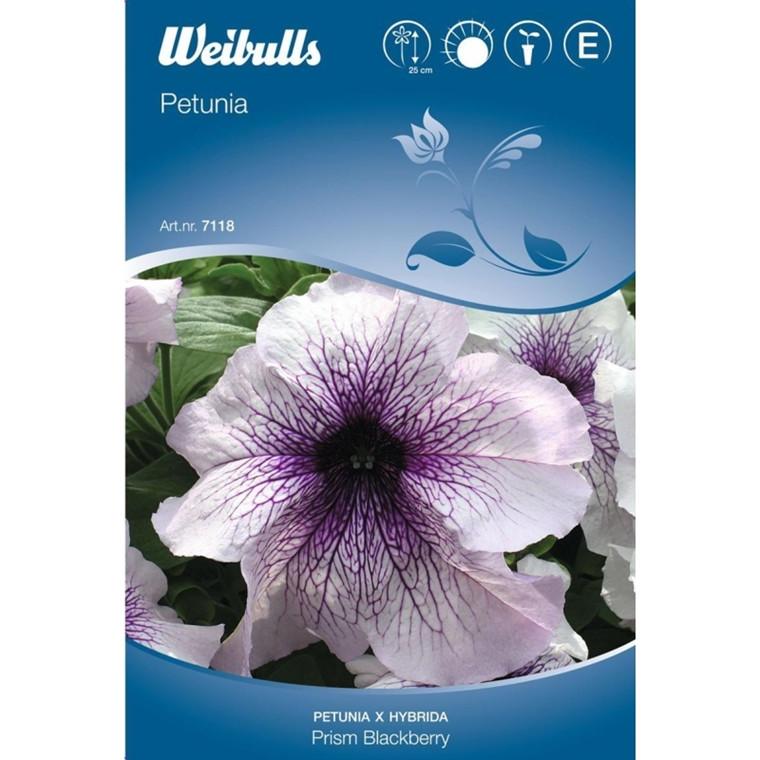 Petunia - Petunia x hybrida - Prism Blackberry  - Frø (W7118)