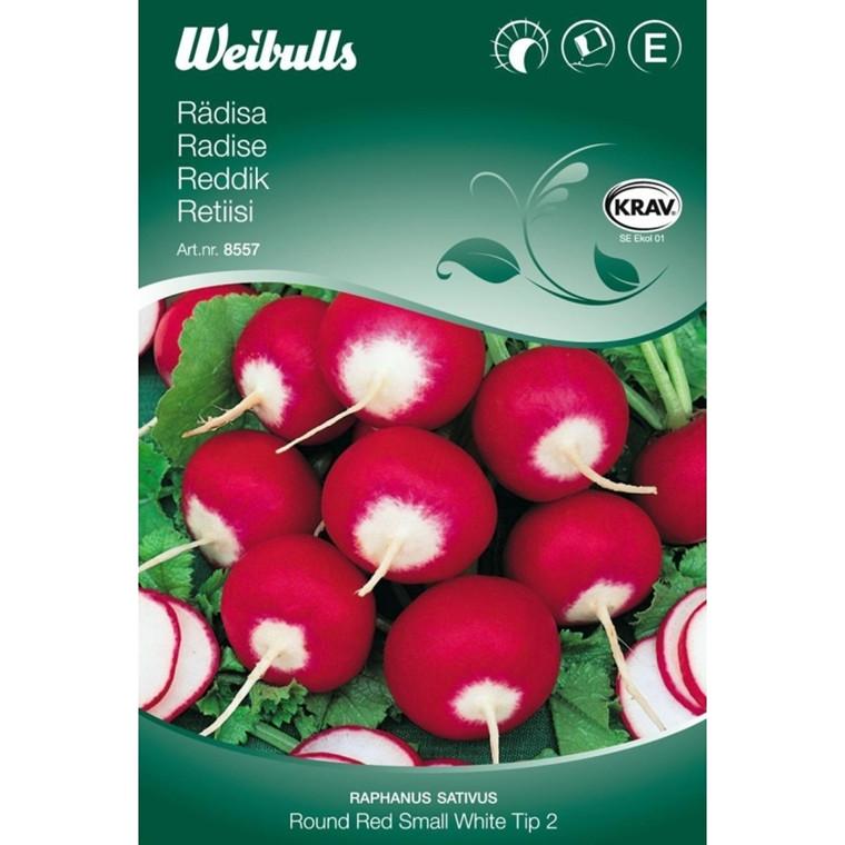 Radise - Raphanus sativus - Round Red Small White Tip - KRAV - Frø (W8558)