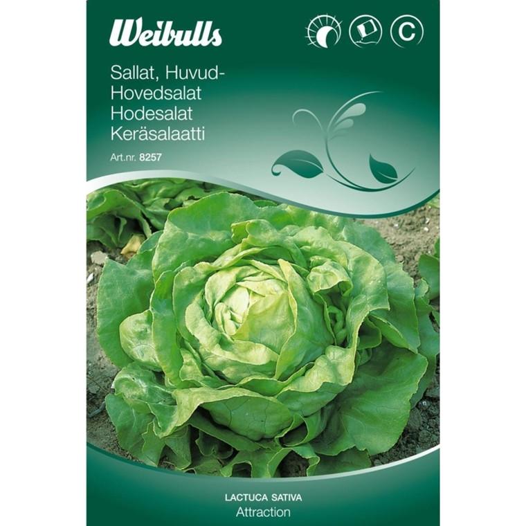 Hovedsalat - Lactuca sativa - Attraction - Frø (W8258)