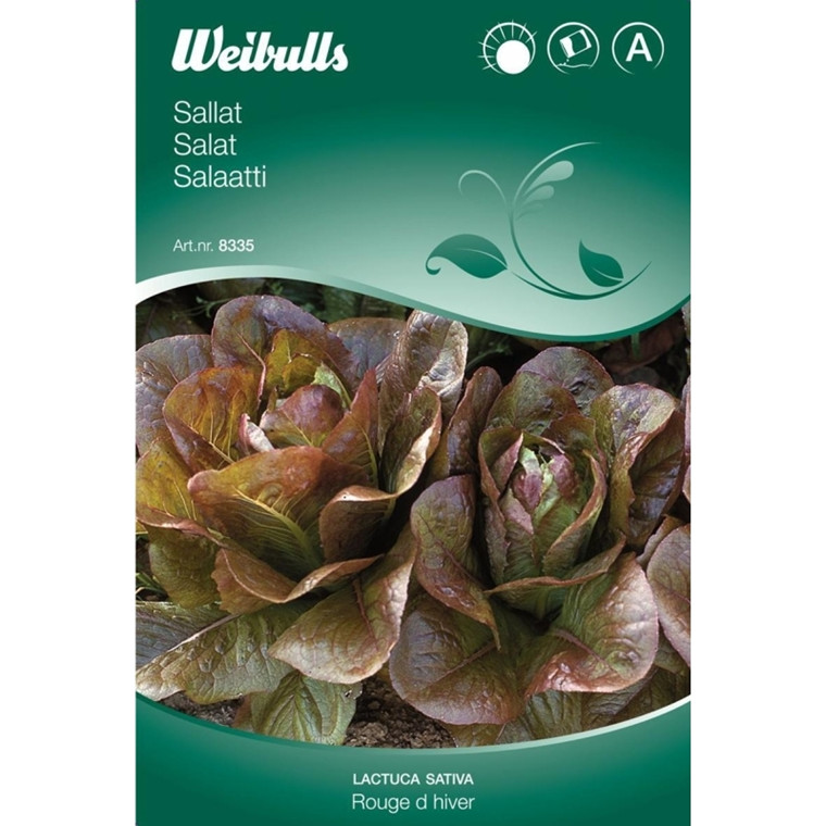 Salat - Lactuca sativa - Rouge D'Hiver - Frø (W8335)