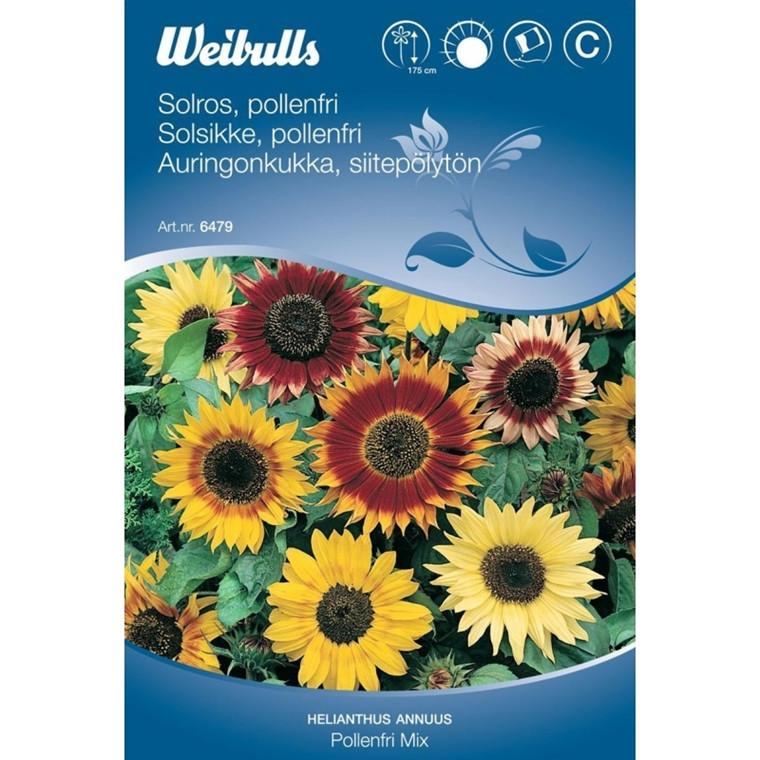 Solsikke - Hellianthus annuus - Pollenfri mix - Frø (W6480)