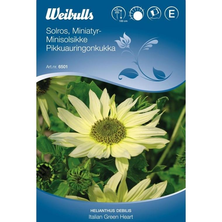 Minisolsikke - Helianthus debilis - Italian Green Heart - Frø (W6501)