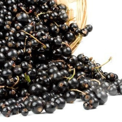 Ribes nigrum 'Ben Nevis'. (Solbær) - Salgshøjde: 30-50 cm.