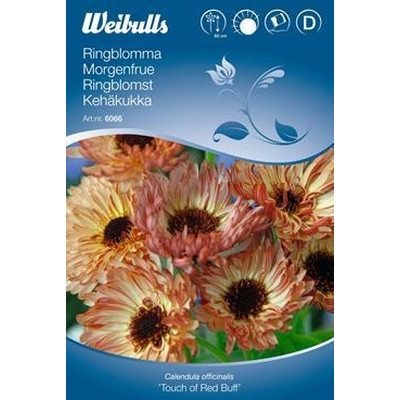 Morgenfrue - Calendula officinalis 'Touch of Red Buff' - Frø (W6066)