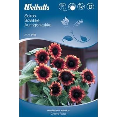 Solsikke - Hellianthus annuus - Cherry Rose - Frø (W6466)