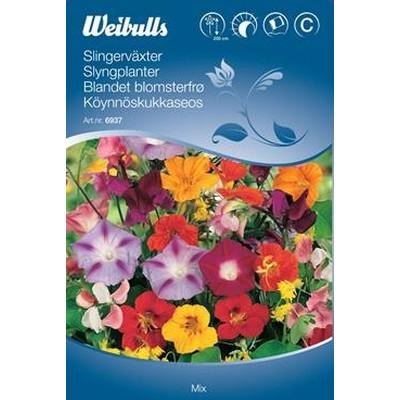 Slyngplanter, blandede blomster - Frø (W6937)