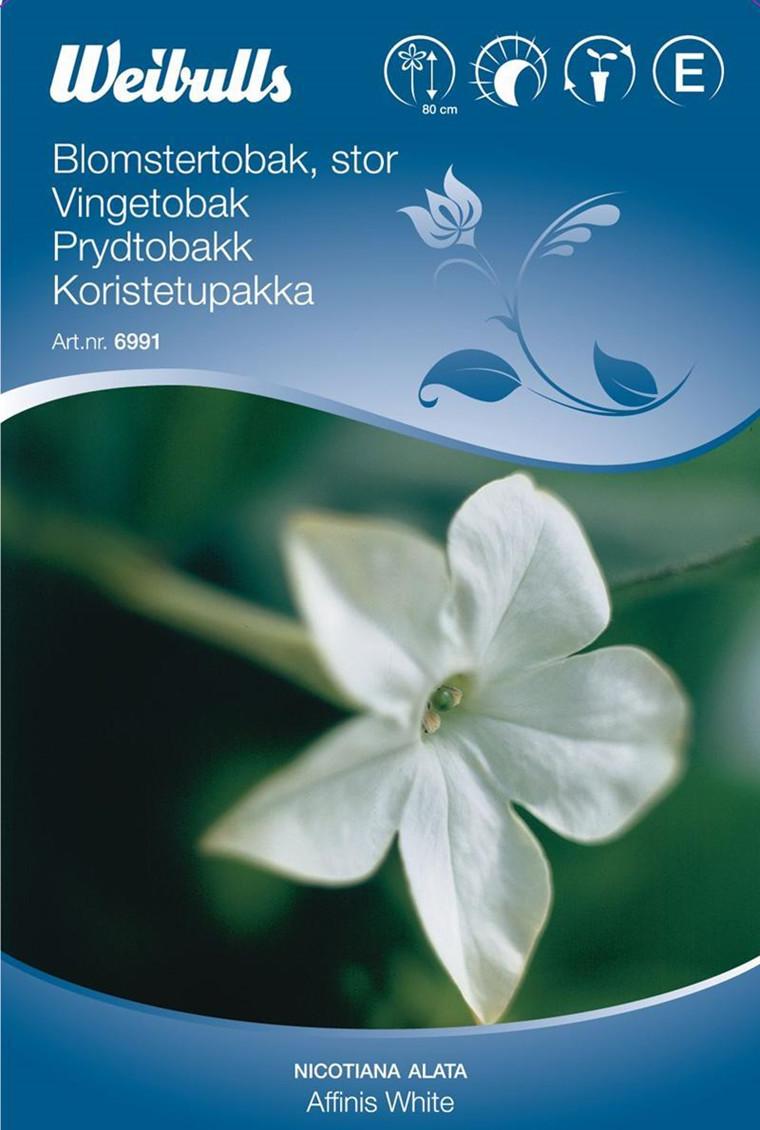 Blomstertobak - Nicotiana alata - Affnis White - Frø (W6991)