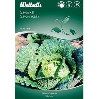 Savoy kål  - Brassica 'Vertus' - Frø (W7918)