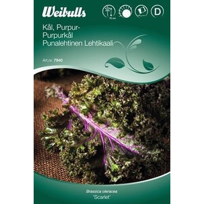 Kål, halvhøj, lilla  - Brassica 'Scarlet' - Frø (W7940)