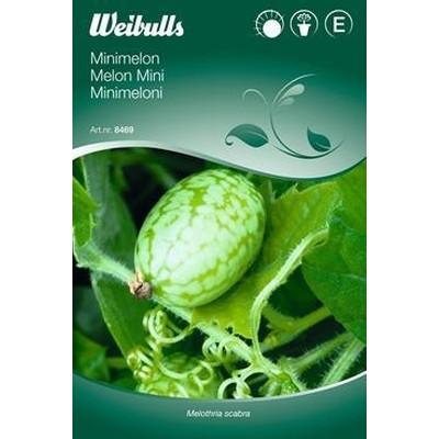 Minimelon - Melothria scabra - Frø (W8469)