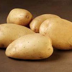 Bintje - Lægge Kartoffel - Pose m/2 kg