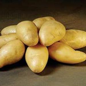 Exquisa - Lægge Kartoffel - Pose m/2 kg