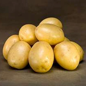 Gala - Lægge Kartoffel - Pose m/2 kg