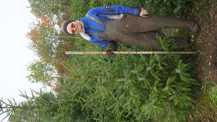 Picea omorika - salgshøjde.: 125-150 cm. - Serbisk Gran