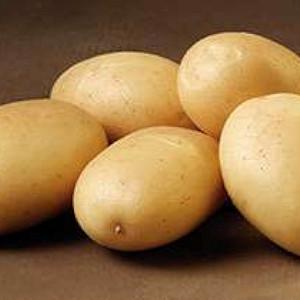 Sava - Økologisk Lægge Kartoffel - Pose m/2 kg