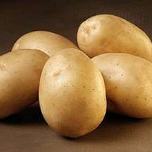 Solist - Økologisk Lægge Kartoffel - Pose m/2 kg