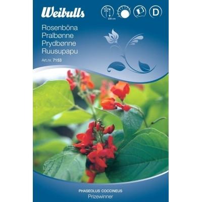 Pralbønne - Phaseolus coccineus - Prizewinner - Frø (W7153)