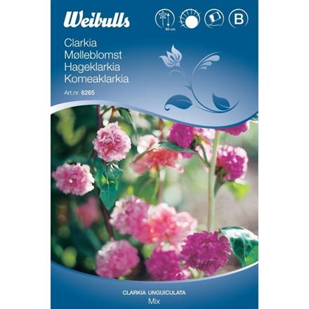 Mølleblomst - Clarkia unguiculata - Mix - Frø (W6265)