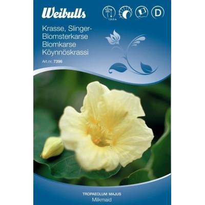 Blomsterkarse - Tropaeolum majus - Milkmaid - Frø (W7396)