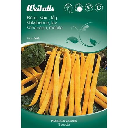 Voksbønne lav - Phaseolus vulgaris - Sonesta - Frø (W8449)