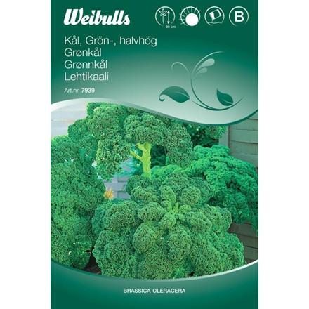 Grønkål - Brassica oleracea - Halvhøj - Frø (W7938)