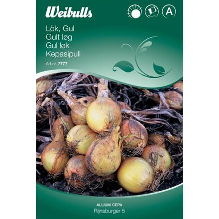 Løg gul - Allium cepa - Rijnsburger 5 - Frø (W7778)