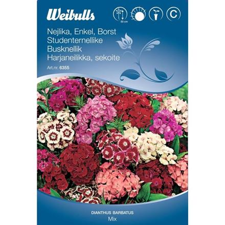 Studenternellike enkel mix - Dianthus barbatus - Frø (W6355)