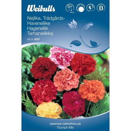 Havenellike - Dianthus caryophyllus - Triumph mix - Frø (W6357)