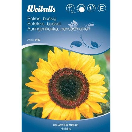 Solsikke busket - Helianthus annuus - Holiday - Frø (W6483)