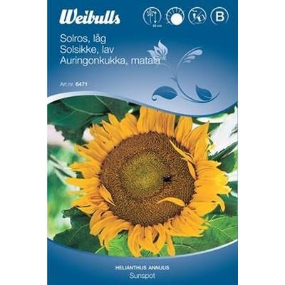 Solsikke - Hellianthus annuus - Sunspot - Frø (W6471)