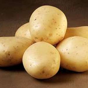 Jutlandia - Lægge Kartoffel - Pose m/2 kg