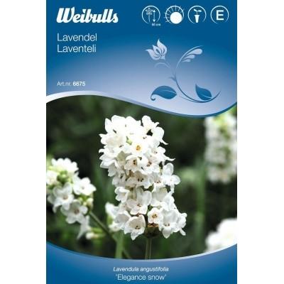 Lavendel - Lavendula angustifolia - Elegance Snow - Frø (W6675)
