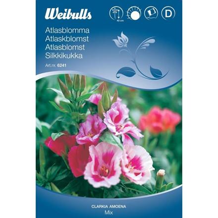Atlaskblomst bl. - Clarkia amoena - Frø (W6241)