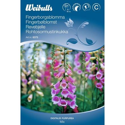 Fingerbølblomst - Digitalis purpurea - Mix - Frø (W6375)