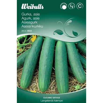 Asieagurk friland  - Cucumis sativus - Langelands kæmpe - Frø (W8023)