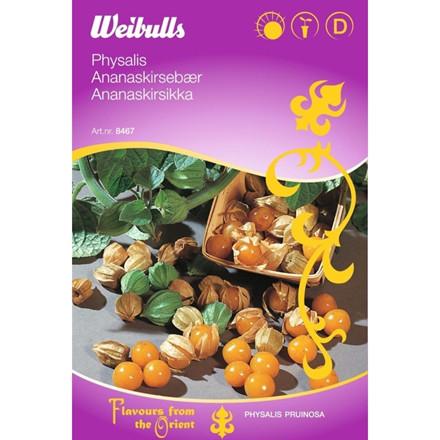 Ananaskirsebær - Physalis pruinosa - ORIENTAL - Frø (W8467)