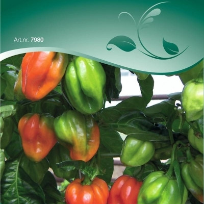 Chili - Capsicum - Carribean Antillais - Frø (W7980)