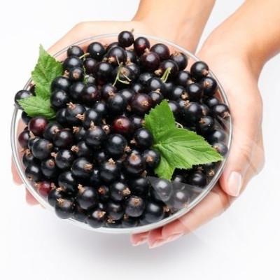 Ribes nigrum 'Ben Alder'.  - Försäljningshöjd: 30-50 cm. - Svarta vinbär (FJ - NP))