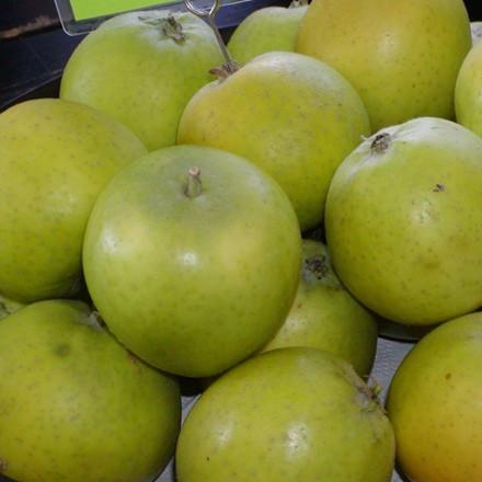 Æble 'Ananas Renette' -salgshøjde: 150-200 cm.