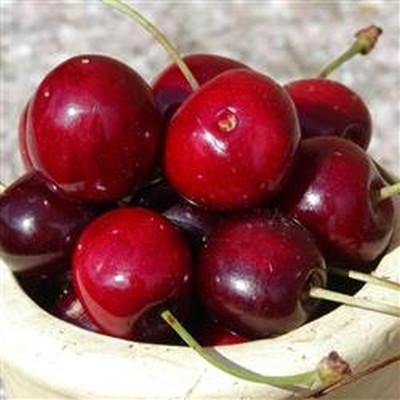 Kirsebær 'Burlat' -salgshøjde: 150-200 cm.